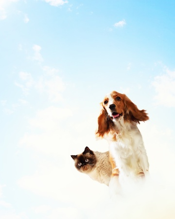 dog cat: Two home pets next to each other on a light background  funny collage