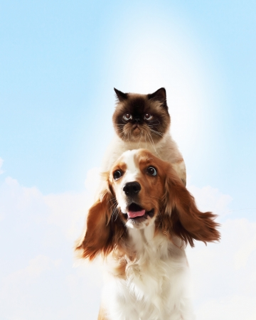 Two home pets next to each other on a light background  funny collage photo