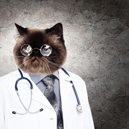 funny cat: Funny fluffy cat doctor in a robe and glasses  collage