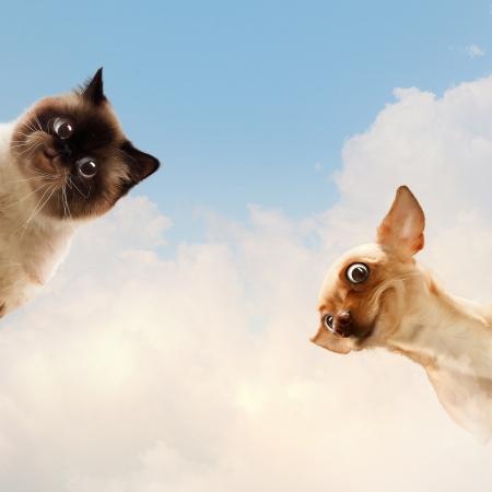 caras chistosas: Dos mascotas en casa junto a la otra en un collage divertido fondo luz