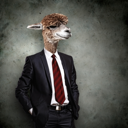 Portrait of a funny camel in a business suit on a gray background  collage photo