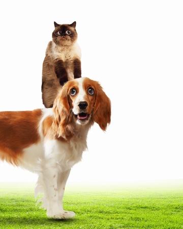 Drie huisdieren thuis naast elkaar op een lichte achtergrond grappige collage