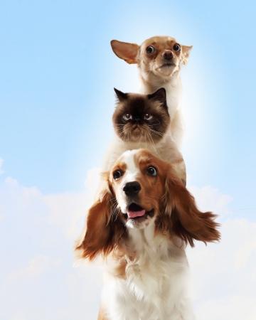 빛 배경에 재미 콜라주 서로 옆에 세 집에 애완 동물