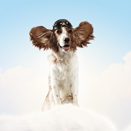 A dog wearing a helmet pilot  Dreams of the sky  Funny Collage photo