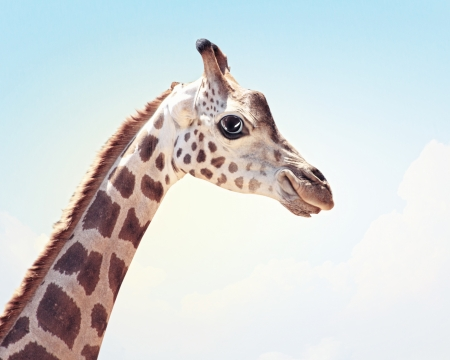Muzzle fun spotted giraffe on a light background  Collage  Stock Photo