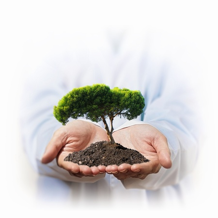 mango tree: A green tree in the hand of a businessman
