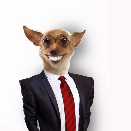 Funny portrait of a dog in a suit on an abstract background  Collage  photo