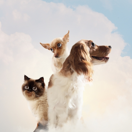 Three home pets next to each other on a light background  funny collage photo