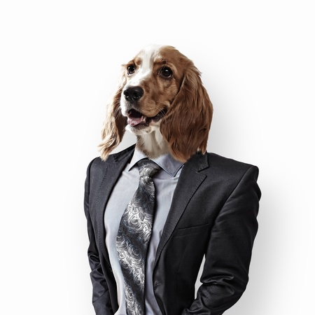Funny portrait of a dog in a suit and orange helmet on an abstract background  Collage  photo