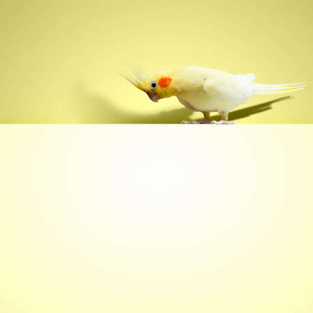 Parrot sitting on blank banner  Place for text photo