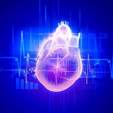 Image virtuelle du c?ur humain avec cardiogramme Banque d'images