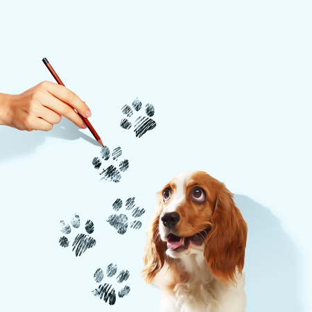 Image of funny spaniel with paw drawing photo