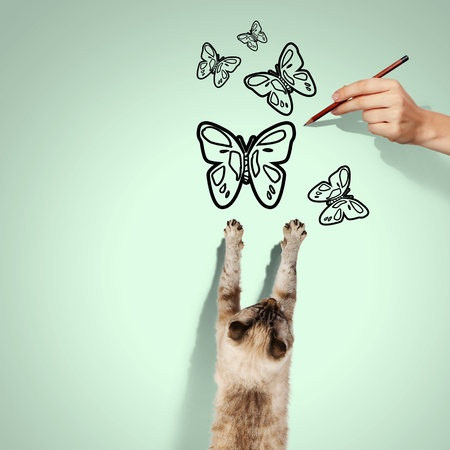 mew: Image of siamese cat catching drawn butterfly Stock Photo