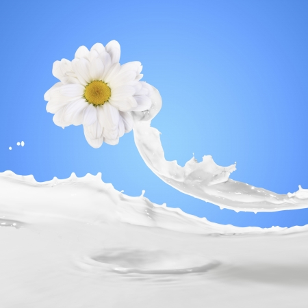 Image of milk splashes with camomile against color background photo