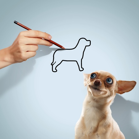 Image of little funny dog and human hand Stock Photo - 19975726