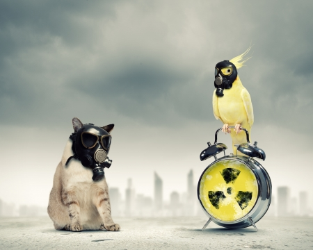 Cat and parrot in gas masks  Ecology concept