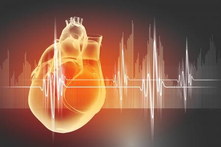 vena: Virtual image of human heart with cardiogram Stock Photo
