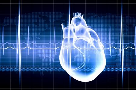 electrocardiograma: Imagen virtual del corazón humano con el cardiograma Foto de archivo