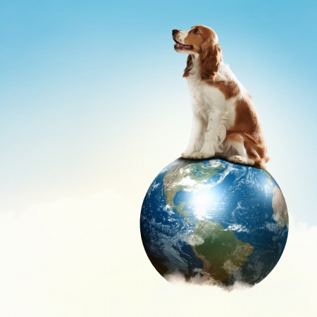 globetrotter: Dog with the Earth planet  Funny collage