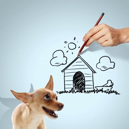 Bild des kleinen lustigen Hund und die menschliche Hand