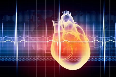 heartattack: Virtual image of human heart with cardiogram Stock Photo