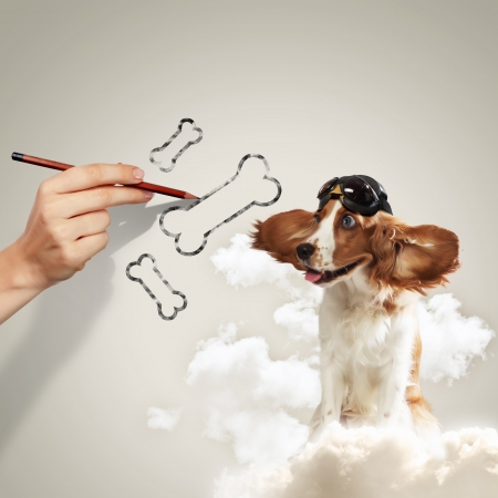Image of funny spaniel dog in pilot helmet photo