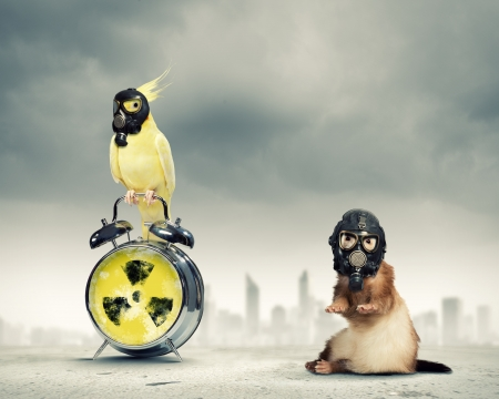 air demonstration: Cat and parrot in gas masks  Ecology concept