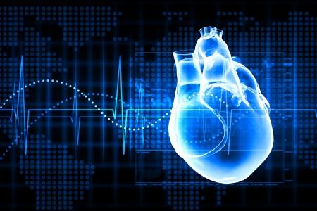 organos internos: Imagen virtual del coraz�n humano con el cardiograma Foto de archivo
