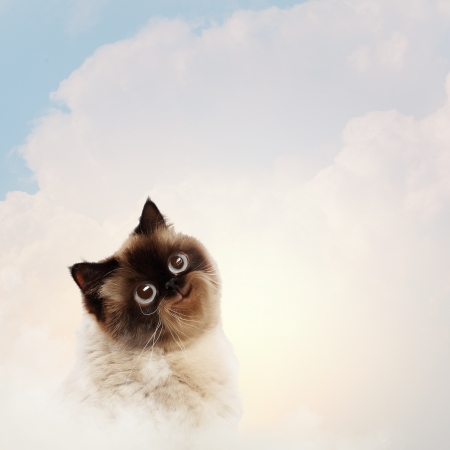 Funny fluffy cat against color background  Collage photo