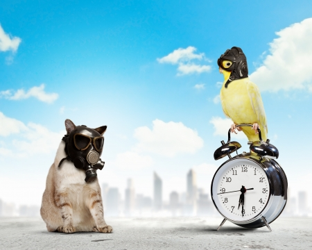 Cat and parrot in gas masks  Ecology concept Stock Photo - 20619493