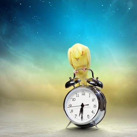 Image of yellow parrot sitting on alarm clock Stock Photo - 20661856