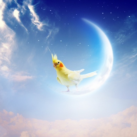 Image of yellow parrot sitting on moon photo