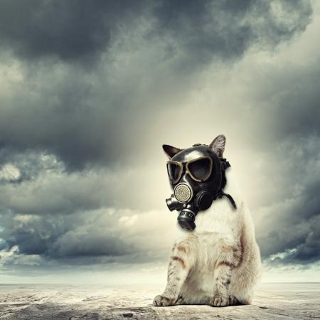 Afbeelding van kat in gasmasker Ecology concept Stockfoto