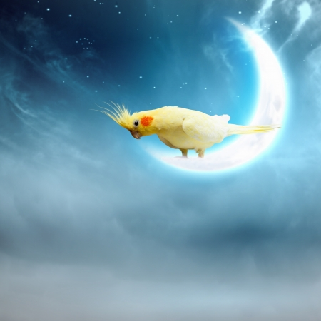 Image of yellow parrot sitting on moon Stock Photo - 20661926