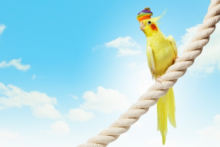 Image of funny parrot in hat sitting on rope photo