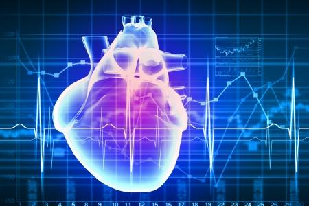 enfermedades del corazon: Imagen virtual del corazón humano con el cardiograma Foto de archivo