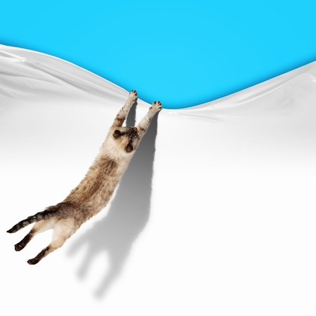 Image of jumping Siamese cat playing with with sheet photo