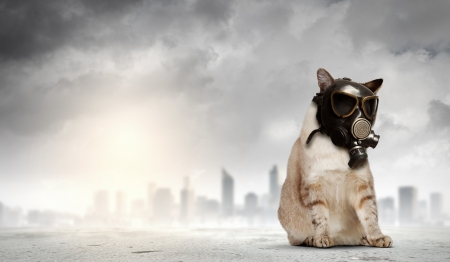 Image of cat in gas mask  Ecology concept Stock Photo - 20839141