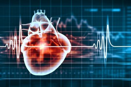 Virtuale immagine del cuore umano con cardiogramma