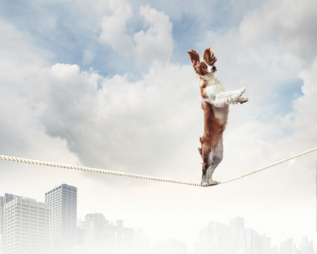 fail: Image of spaniel dog balancing on rope
