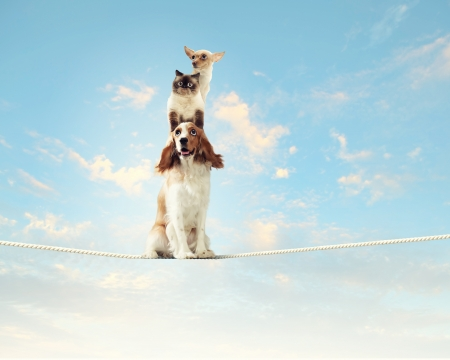 Image of spaniel dog balancing on rope photo
