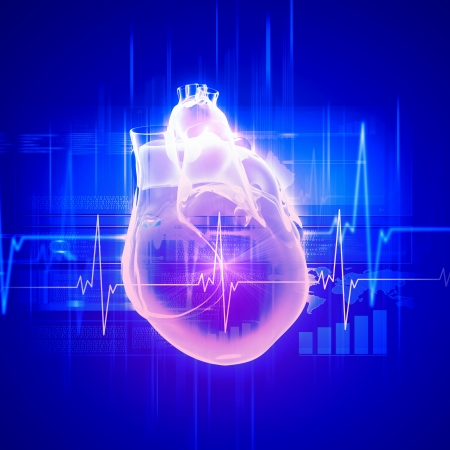 Virtual image of human heart with cardiogram photo