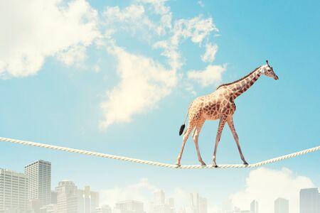 Image of giraffe walking on rope high in sky Stock Photo