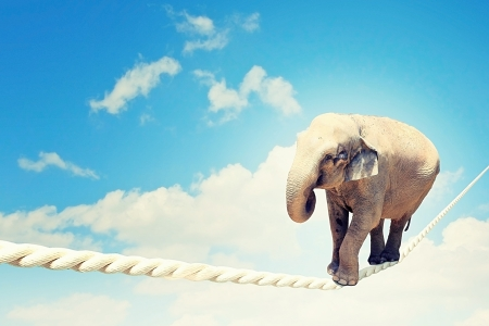 Image of elephant walking on rope high in sky