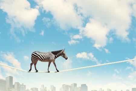 Image de zèbre marchant sur une corde haute dans le ciel