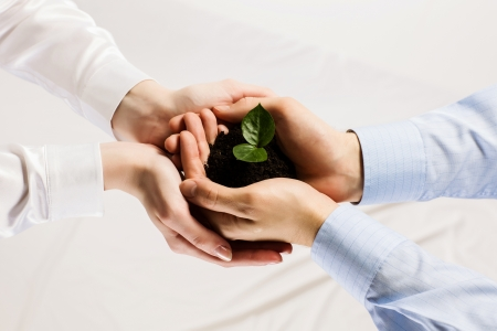 growing success: Close up of businessmen hands with sprout in palms Stock Photo