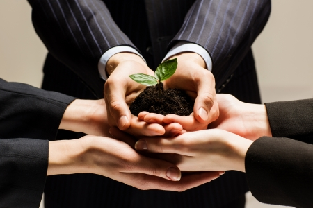 growing partnership: Close up of businessmen hands with sprout in palms Stock Photo