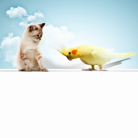Image of cat and parrot sitting on blank banner photo