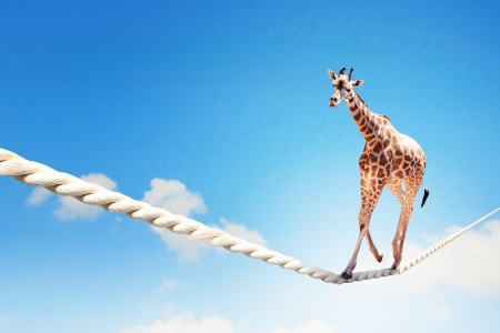 Image of giraffe walking on rope high in sky Foto de archivo