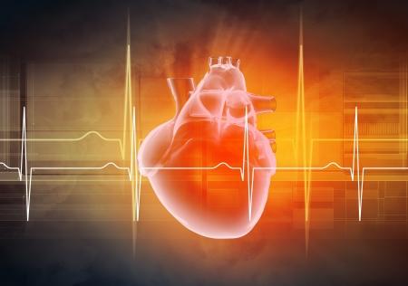 Imagen virtual del corazón humano con el cardiograma